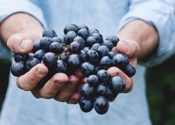 Veneto, Sardegna, Salento trainano i consumi del vino. Agenti di commercio protagonisti